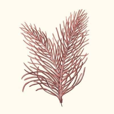 https://imgc.artprintimages.com/img/print/seaweed-collection-ii_u-l-q1bhcmg0.jpg?p=0