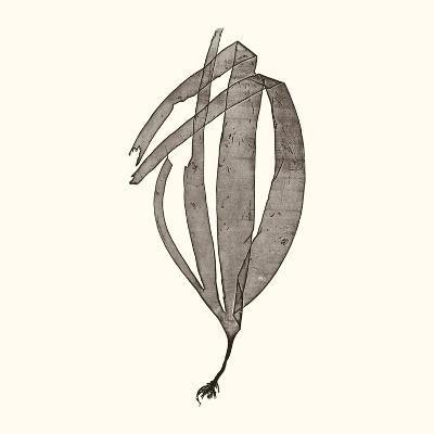 Seaweed Collection V-Vision Studio-Art Print