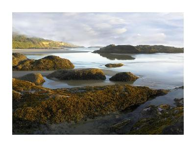 Seaweed covered rocks exposed at low tide, Neptune Beach, Oregon-Tim Fitzharris-Art Print