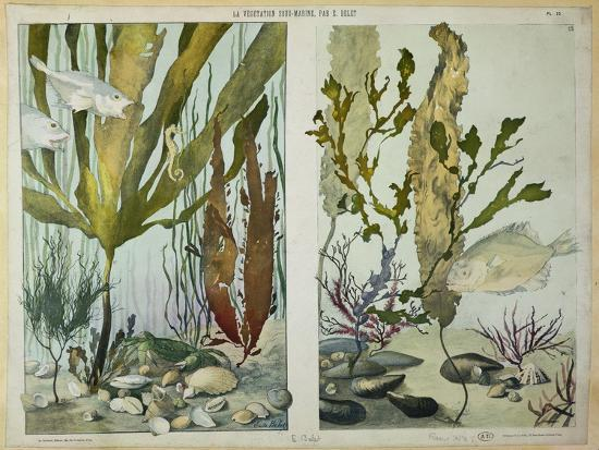 "Seaweed, Fishes, Sea Horse, Crab and Shellfish, Illustrated Plates from ""La Vie Sous Marine""-Emile Belet-Giclee Print"