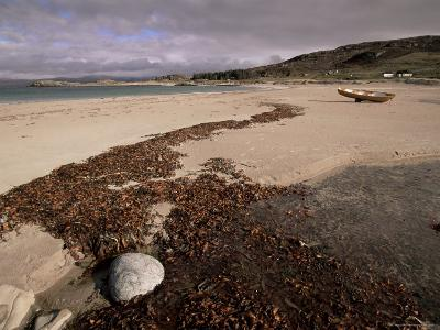 Seaweed on Beach, Mellon Udrigle, Wester Ross, Highland Region, Scotland, United Kingdom-Neale Clarke-Photographic Print