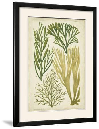 Seaweed Specimen in Green III-Vision Studio-Framed Photographic Print