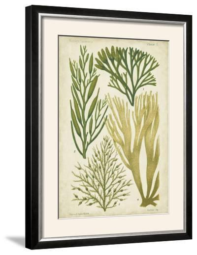 Seaweed Specimen in Green III-Vision Studio-Framed Photographic Print