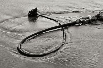 Seaweed-Lee Peterson-Photographic Print