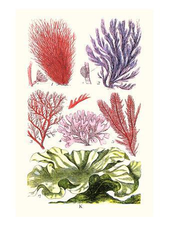 https://imgc.artprintimages.com/img/print/seaweeds-green-laver_u-l-pgfxni0.jpg?p=0
