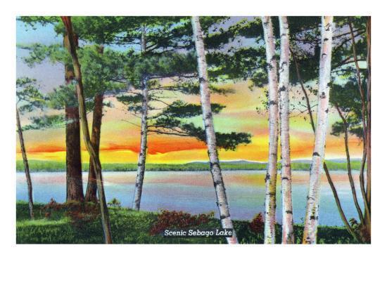 Sebago Lake, Maine - Scenic View Along the Lake with White Birches, c.1949-Lantern Press-Art Print
