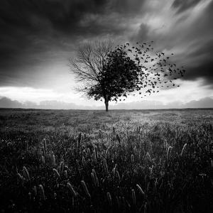 Illusion D'Un Printemps Perdu by Sebastien Del Grosso