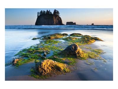 Second Beach at Olympic National Park, Washington, USA--Art Print