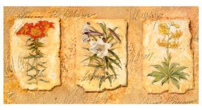 Secret Garden III-Walter Kano-Art Print