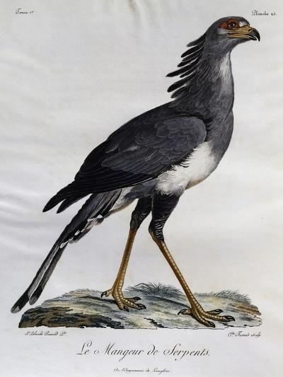 Secretary Bird (Sagittarius Serpentarius)--Giclee Print
