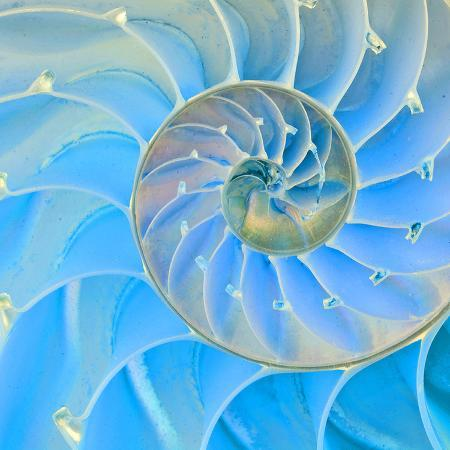 section-of-nautilus-shell