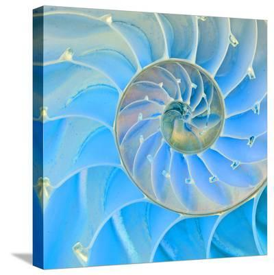 Section Of Nautilus Shell--Stretched Canvas Print