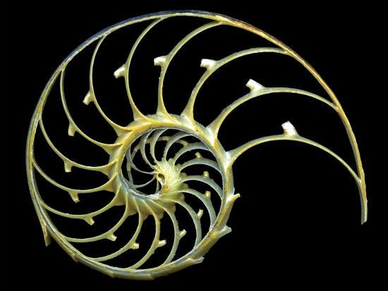 Sectioned Shell of a Nautilus-PASIEKA-Photographic Print