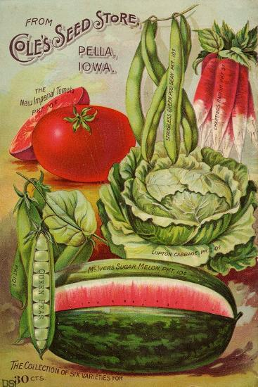Seed Catalog Captions (2012): Cole's Seed Store, Pella, Iowa, Garden, Farm and Flower Seeds, 1896--Premium Giclee Print