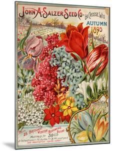 Seed Catalog Captions (2012): John A. Salzer Seed Co. La Crosse, Wisconsin, Autumn 1895