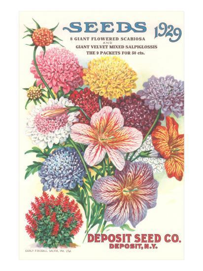 Seed Catalogue with Flower Assortment--Art Print