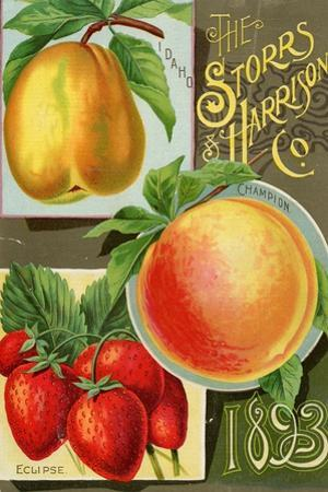 Seed Catalogues: Storrs and Harrison, Co. Painesville, OH, 1893