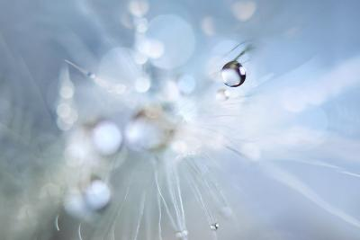 Seed Fireworks-Heidi Westum-Photographic Print