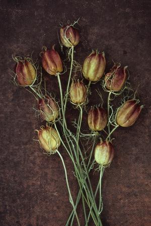 Seed Heads-Den Reader-Premium Photographic Print