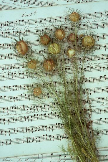 Seed Heads-Den Reader-Photographic Print