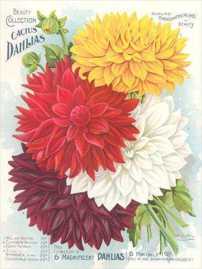 Seed Packet, Dahlias--Art Print