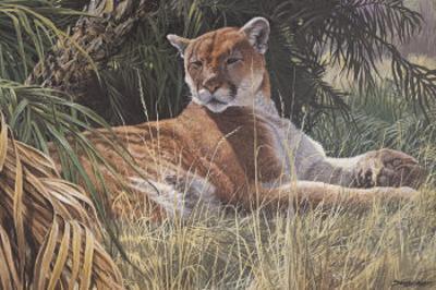 Last Sanctuary- Florida Panther (detail) by Seerey & Lester