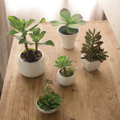 Segovia Succulent Set *--Home Accessories