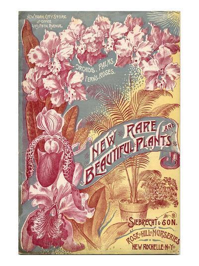 Seibrecht Plants New Rochelle--Art Print