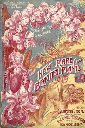 Seibrecht Plants New Rochelle