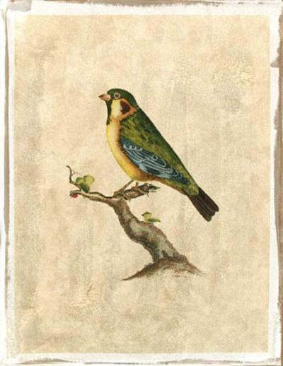 Selby Birds II-Prideaux John Selby-Premium Giclee Print