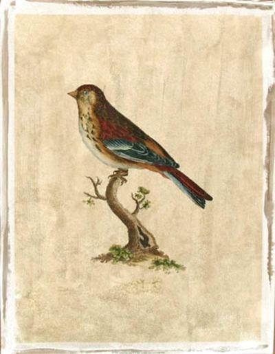 Selby Birds IV-Prideaux John Selby-Premium Giclee Print
