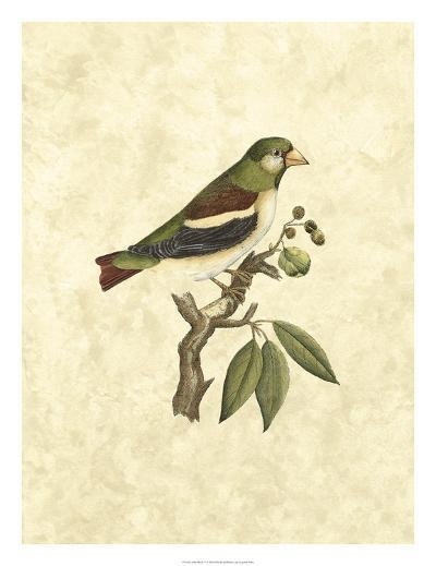 Selby Birds V-John Selby-Giclee Print