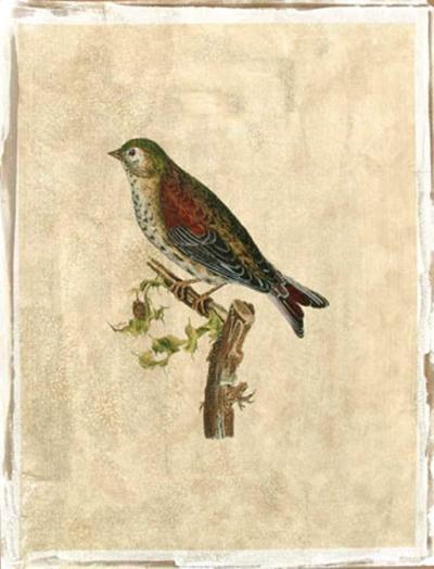 Selby Birds VI-Prideaux John Selby-Premium Giclee Print