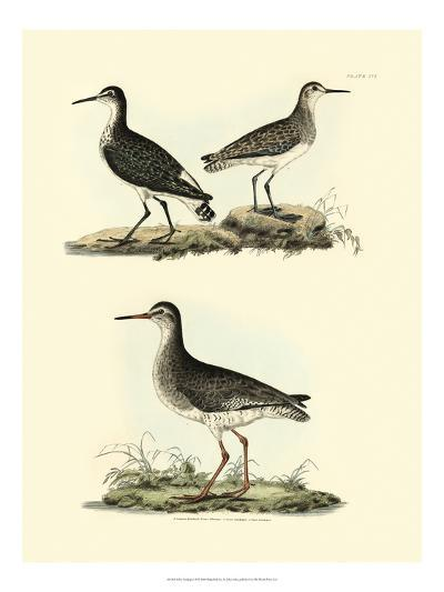 Selby Sandpipers II-John Selby-Art Print