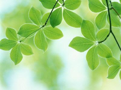 https://imgc.artprintimages.com/img/print/selective-focus-close-up-of-green-leaves-hanging-from-tree_u-l-pxtxta0.jpg?p=0