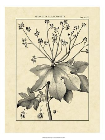 Vintage Botanical Study I by Sellier