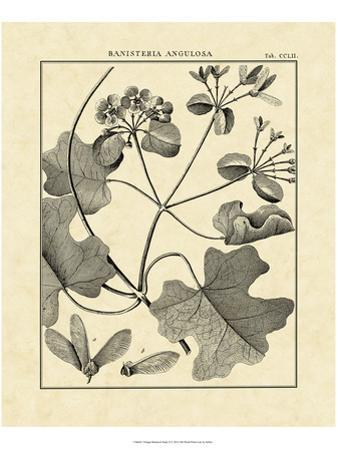 Vintage Botanical Study II by Sellier