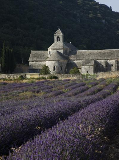 Senanque Abbey and Lavender Field, Vaucluse, Provence, France, Europe-Angelo Cavalli-Photographic Print