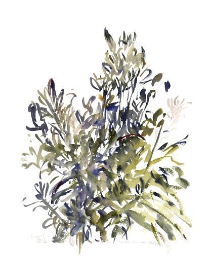 Senecio and Other Plants, 2003-Claudia Hutchins-Puechavy-Giclee Print