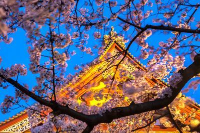 https://imgc.artprintimages.com/img/print/sensi-ji-temple-in-tokyo-at-night-seen-through-cherry-blossom-tokyo-japan-asia_u-l-q12r8if0.jpg?p=0