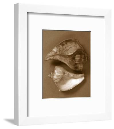 Sensual Shells II-Renee W^ Stramel-Framed Art Print