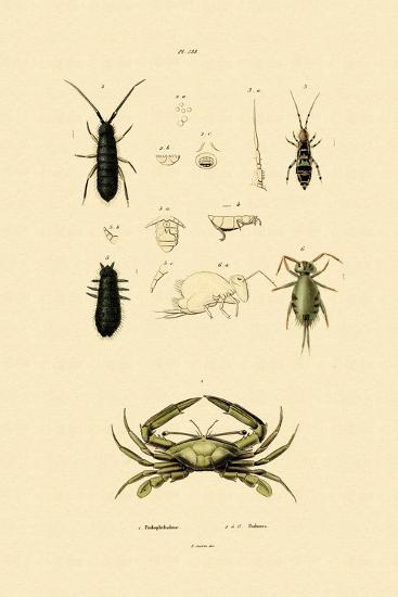 Sentinel Crab, 1833-39--Giclee Print