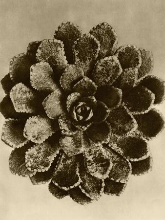 https://imgc.artprintimages.com/img/print/sepia-botany-study-ii_u-l-p8lflf0.jpg?p=0
