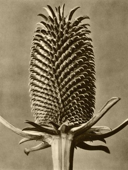 Sepia Botany Study III-Vision Studio-Art Print