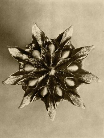 https://imgc.artprintimages.com/img/print/sepia-botany-study-iv_u-l-p8lfn30.jpg?p=0