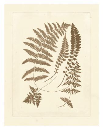 https://imgc.artprintimages.com/img/print/sepia-ferns-ii_u-l-pdtyyw0.jpg?p=0