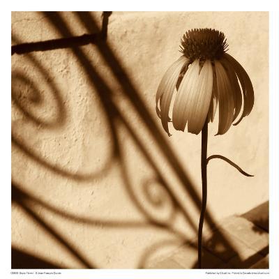 Sepia Flower-Jean-Fran?ois Dupuis-Art Print