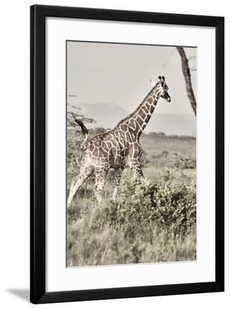 Sepia Giraffe-Susan Bryant-Framed Photo