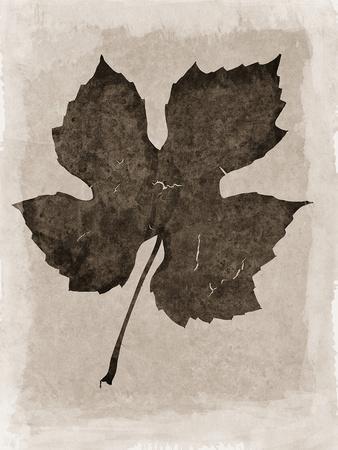 https://imgc.artprintimages.com/img/print/sepia-grape-leaf_u-l-q1a6nto0.jpg?p=0