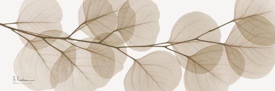 Sepia Kaluptos eucalyptus-Albert Koetsier-Premium Giclee Print